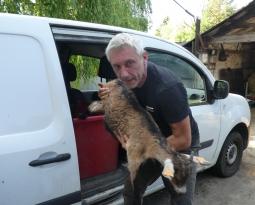 Elles sont arrivées ! Des petites chèvres vont éco-pâturer sur le terril Saint Théodore à Charleroi !
