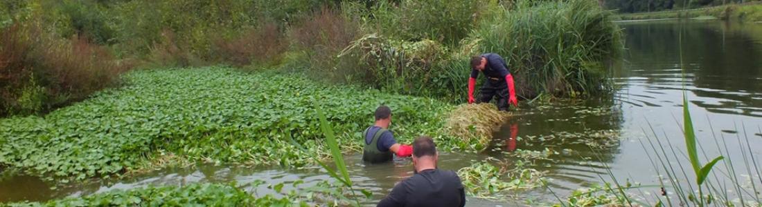 TVBuONAIR : Chantier de lutte contre une plante invasive à la Frayère de Marpent