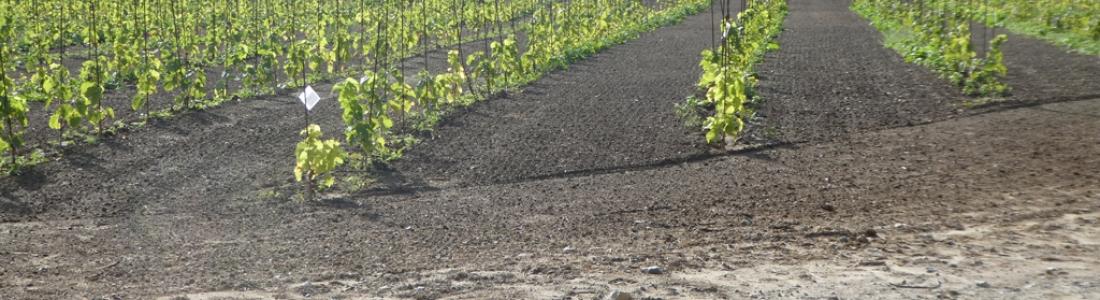 Vigne fertile, la tournée des vignobles carolos et alentours…